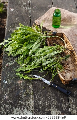 Spring bunch of herbs dandelions with knife taken on a wood dark table. Healthy herbs from garden. See series