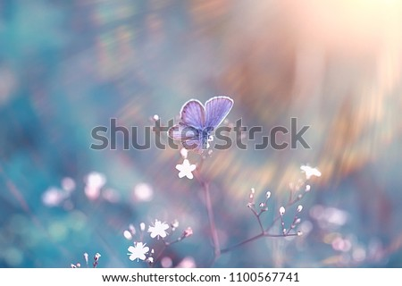 spring butterfly on a flower background, vintage toning background, summer, butterfly nature beautiful