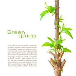 Spring card design with copy space