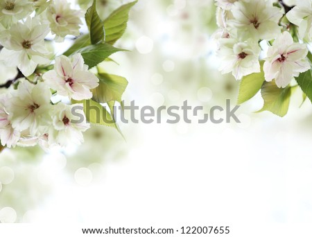Spring cherry blossom,Shallow Dof.