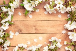 Spring Cherry Blossom  - Spring flowers frame on wooden background