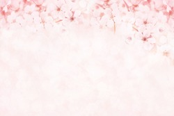 Spring cherry blossom, toned, springtime blossoming flower background, pastel and soft floral card