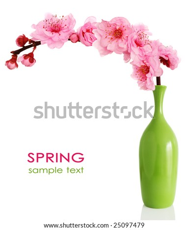 Spring cherry tree blossoms in a green vase isolated on white background.
