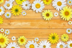 Spring composition. White daisy flowers on orange brown wooden tabletop background.