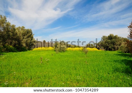 spring country fields at chios-greece #1047354289