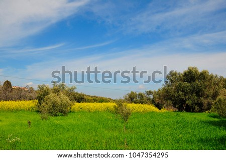 spring country fields at chios-greece #1047354295