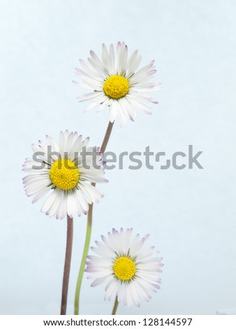 spring daisies on abstract background #128144597
