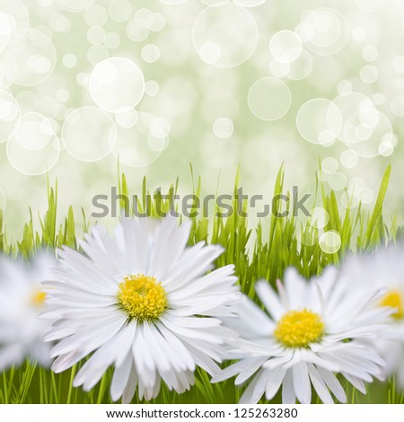 Spring daisy field. Easter card background.