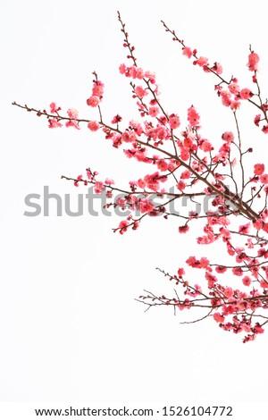 spring dandelion nature flower life