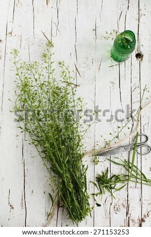 Spring day concept with bunch of herbs and scissors. Rustic style.