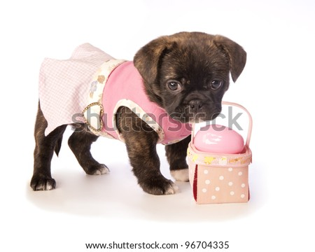 Spring Easter puppy in pink dress isolated on white