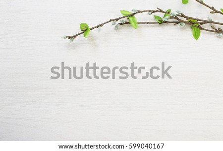 Spring easter pussy willow lying on white wooden desk table background with space for titles and text  #599040167