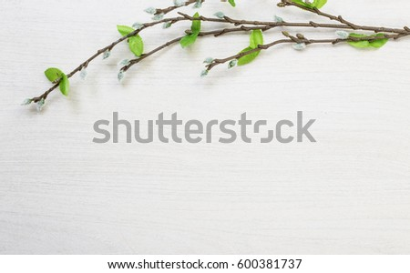 Spring easter pussy willow lying on white wooden desk table background with space for titles and text  #600381737