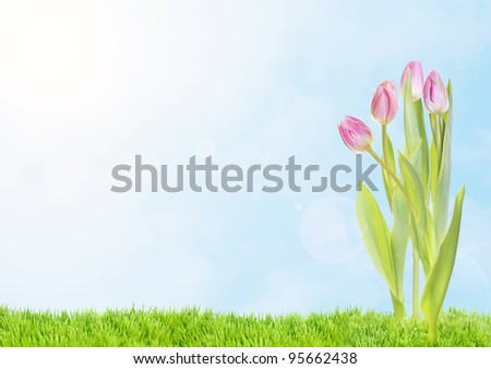 Spring, easter view on pink tulips with petals in sunny day on bright sky background