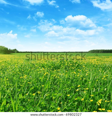 Spring field and blue sky.