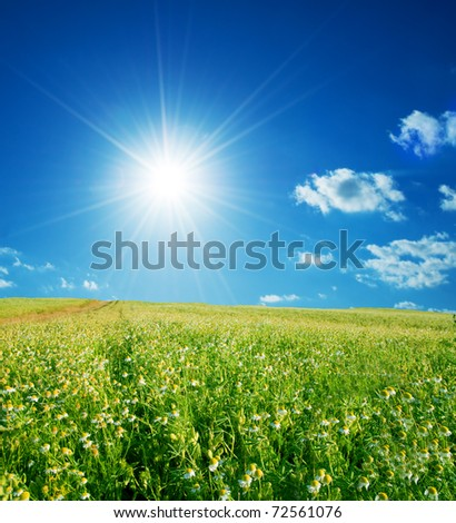 Spring field full of flowers and sunny blue sky