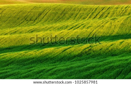 spring field. picturesque hilly field. agricultural field in spring #1025857981