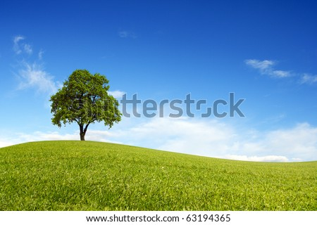 Spring field wit lone tree