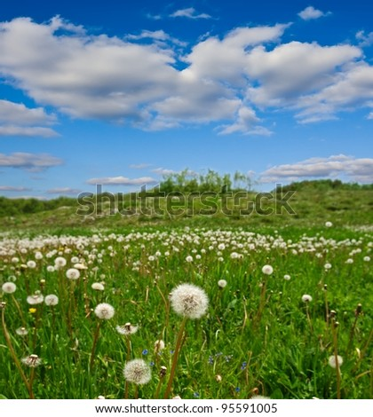 spring field with a dandelions