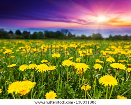 Spring field with dandelions in the morning. Dramatic sky. Ukraine, Europe. Beauty world.