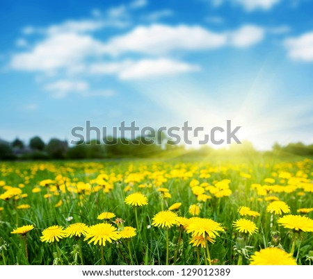 Stock Photo Spring field with dandelions on bright sunny day.