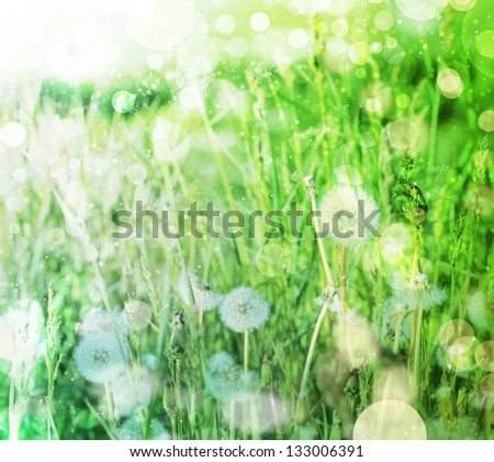 Spring field with dandelions on bright sunny day/ Spring background