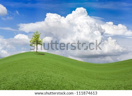 Spring Field with Lonely Tiny Tree
