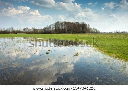 Spring flooded green meadow, forest on the horizon and clouds in the sky reflecting in the water #1347346226