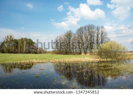 Spring flooded green meadow, forest to the horizon, clouds and trees reflecting in the blue water #1347345812