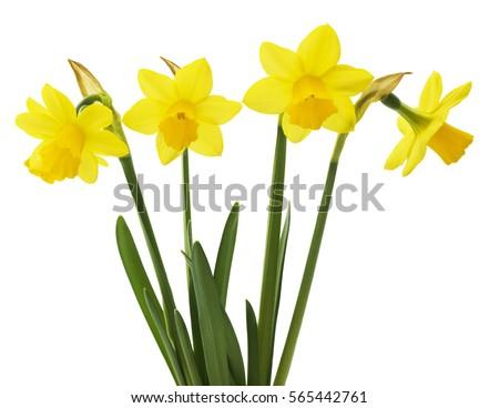 spring floral border  beautiful ...