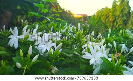 Spring flower background. Fresh flower in the sunrise - Shutterstock ID 739639138