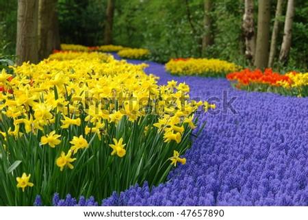 Spring flower bed in Keukenhof - stock photo