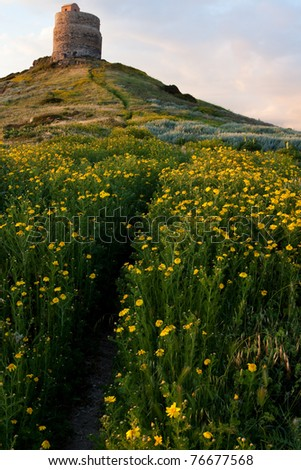 spring flower field with trail to castle tower vivid colors bright yellow pasture colorful spring meadow wildflower landscape Sardinia Italy tourism attraction