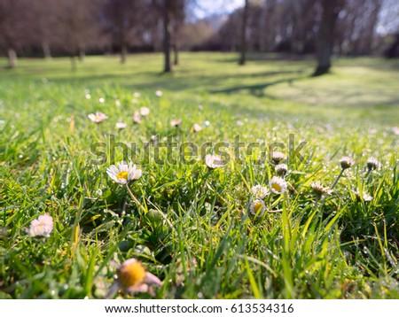 spring flower in forest