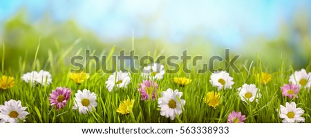 Spring flower in the meadow,spring nature background #563338933