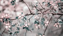 Spring flower landscape. Spring blooming spring flowers against blue sunny sky.  copyspace