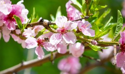 Spring flower landscape. Spring blooming spring flowers against blue sunny sky. Spring flower landscape. copyspace