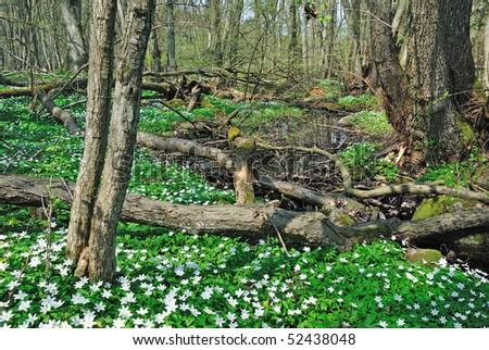 Spring flower meadow in forest