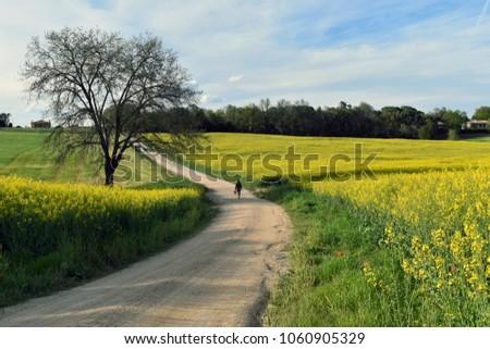 Spring floweredd fields  #1060905329