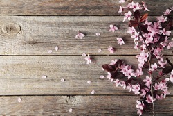 Spring flowering branch on grey wooden background. Toning photo