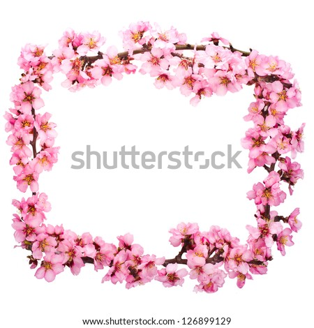 Spring flowering branches, pink flowers, no leaves, blossoms Almond  frame isolated on white background.