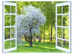 Spring flowering of fruit trees a sunny day the view from the window of a house
