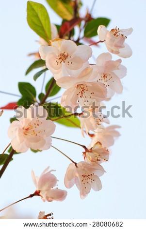 stock-photo-spring-flowers-28080682.jpg