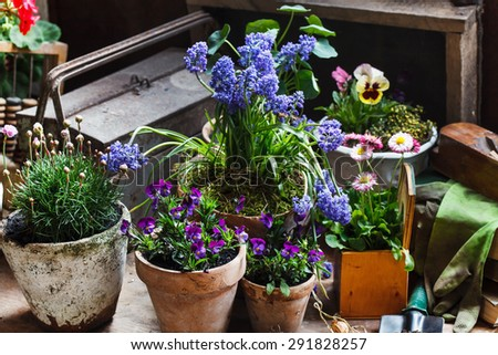 spring flowers #291828257