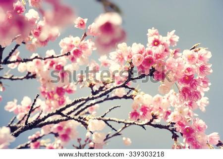 Spring flowers #339303218