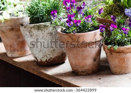 spring flowers #364422899