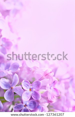 Spring flowers abstract background