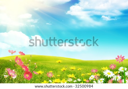 Spring flowers and a grassy meadow