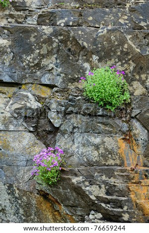 spring flowers and plants on rock cliff