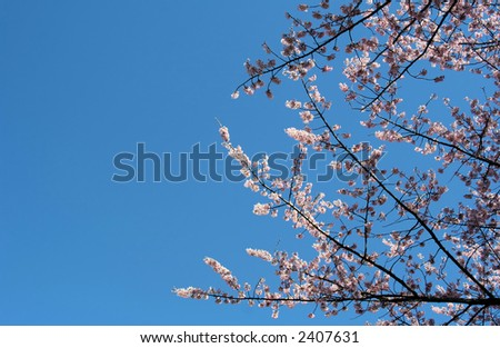 spring trees and flowers. stock photo : Spring Flowers